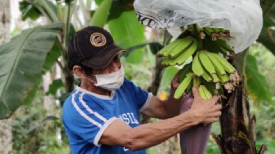 Cofide asigna más de S/ 10 millones en garantías para créditos del FAE-Agro